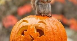Magellan Halloween