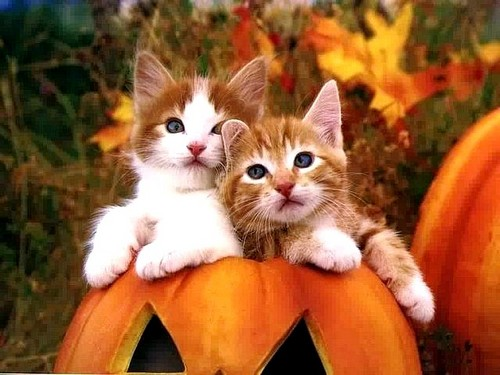 cute-cats-halloween-cats-37735057-500-375